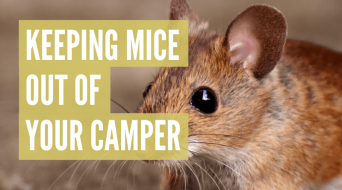 How To Keep Mice Out Of Camper (Best Methods)