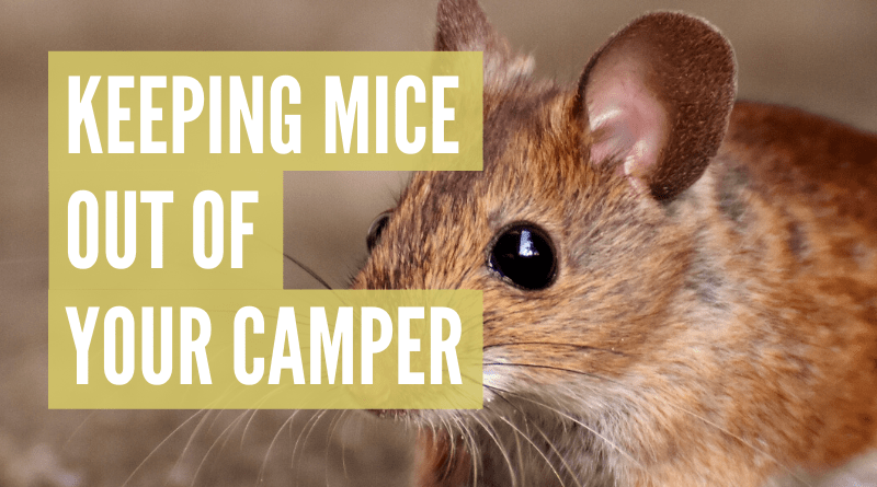 How to keep mice out of camper